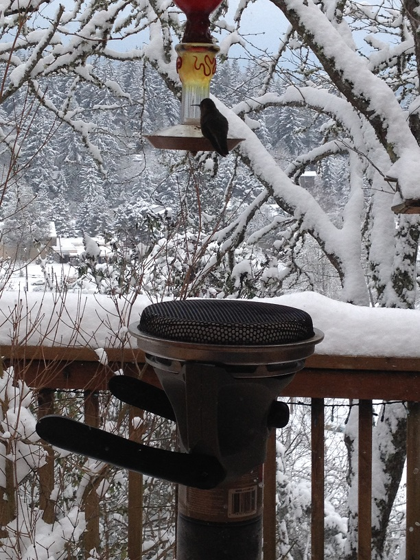 Hummingbird with Heater